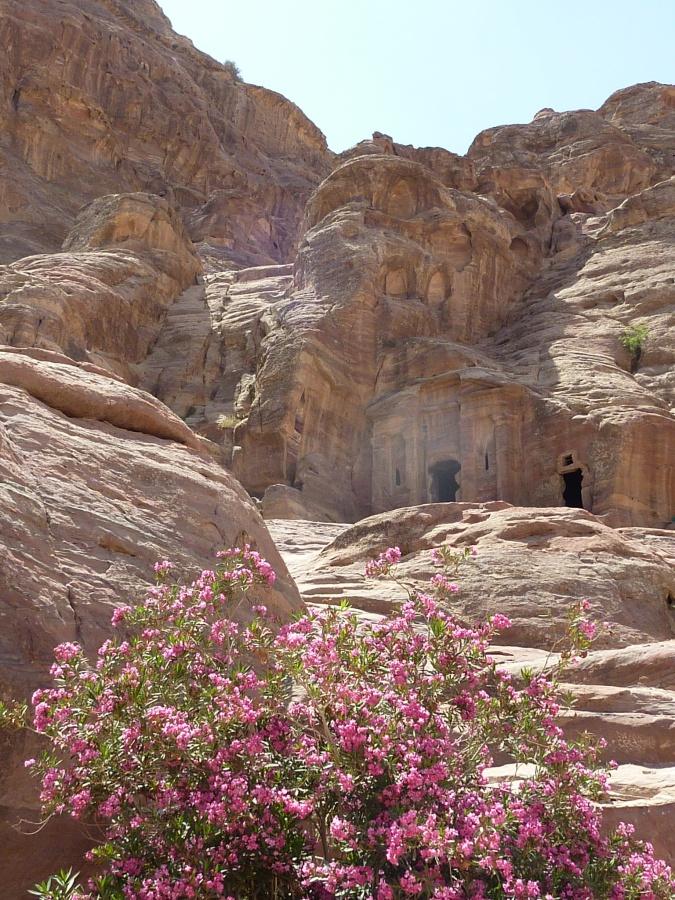 Blumen in Petra