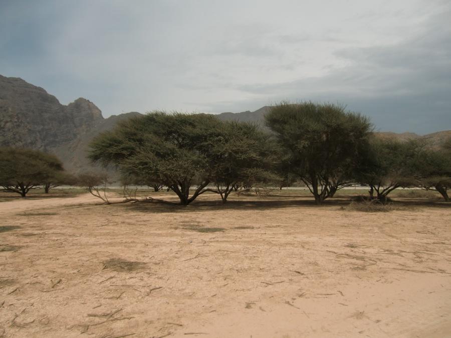 Die Landschaft in Musandam: Karg und rau aber trotzdem wunderschoen