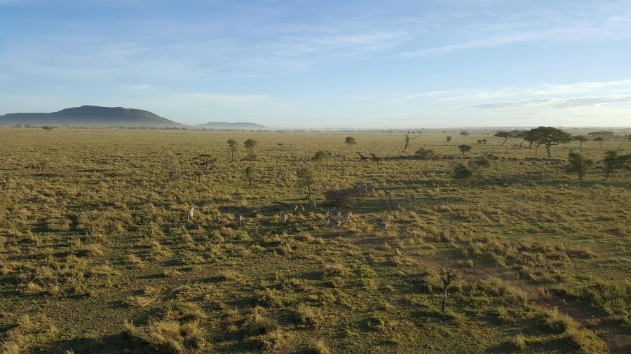 Die Serengeti in Tansania von oben