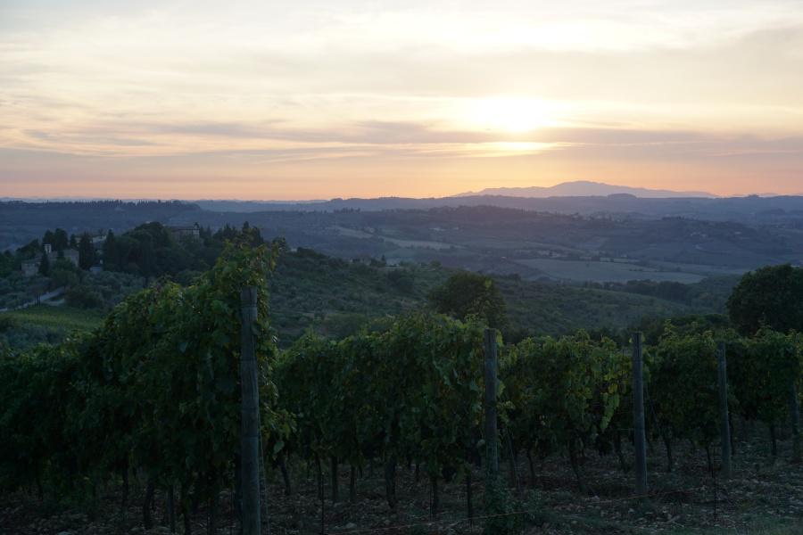 Sonnenuntergang ueber den Weinbergen der Toskana
