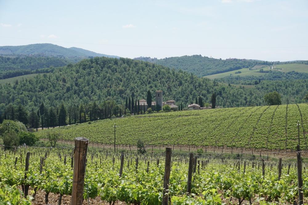 Blick über die Weinberge auf das Castello di Spaltenna