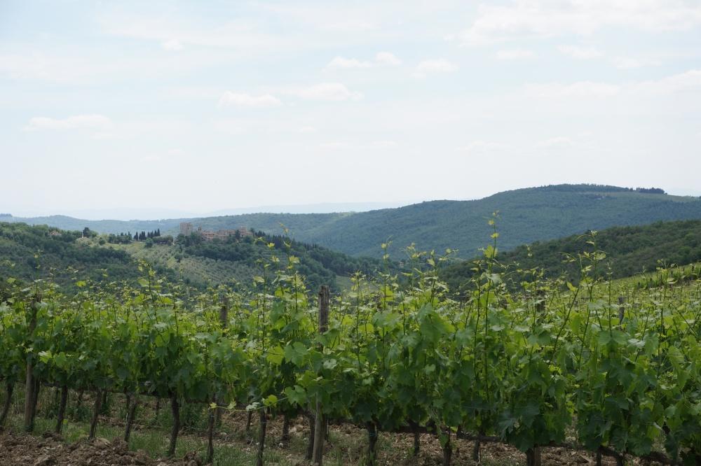 Ausblick beim Wandern ueber die Weinberge Richtung Vertine in Chianti