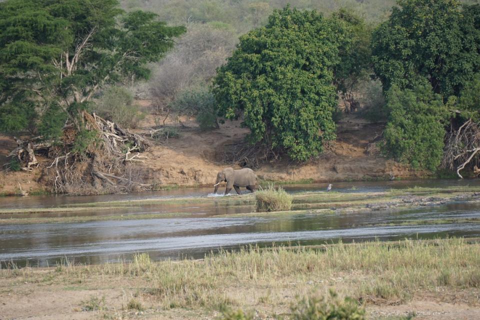 Elefant im Olifants Fluss im Kruger Nationalpark