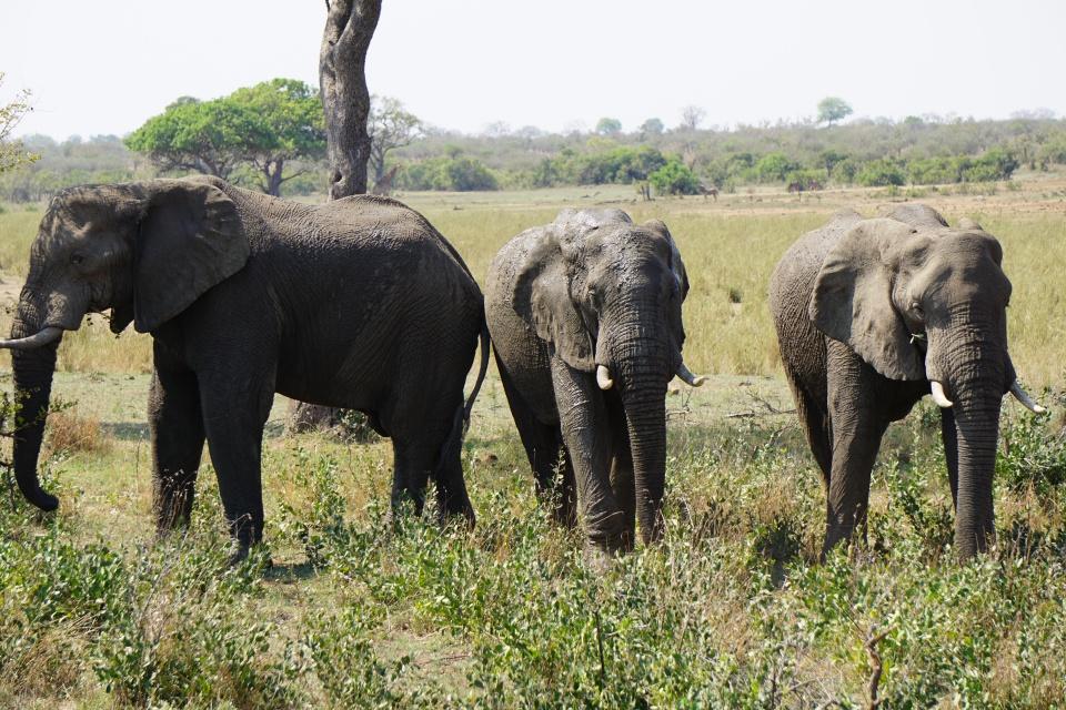 Elefanten in Suedafrika