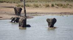 Elefanten baden am Wasserloch