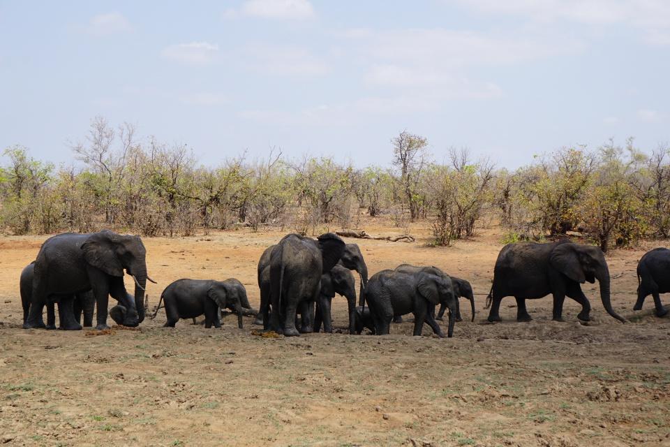Eine Elefantenfamilie nach dem Schlammbad