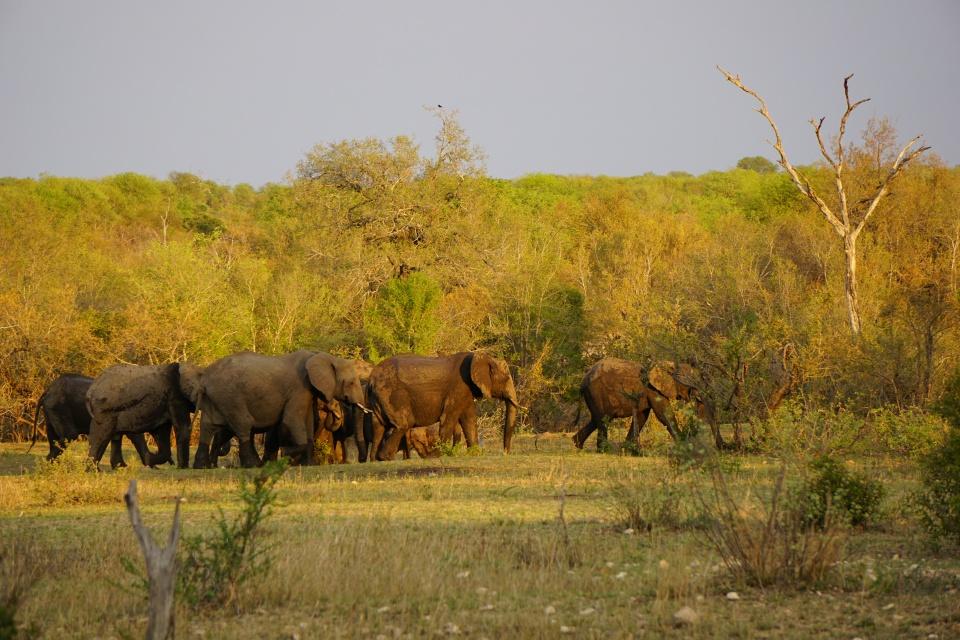 Eine Elefantenherde im Abendlicht