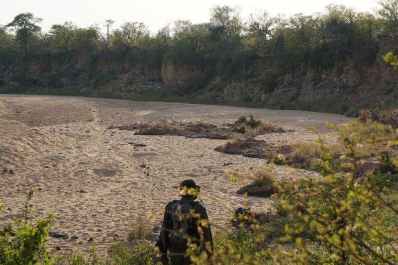 Wir durchqueren ausgetrocknete Flussbetten bei der Walking Safari