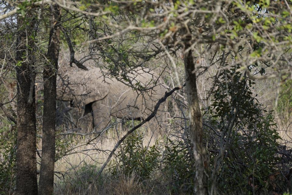 Den Elefanten ganz nahe bei der Walking Safari im Kruger Nationalpark