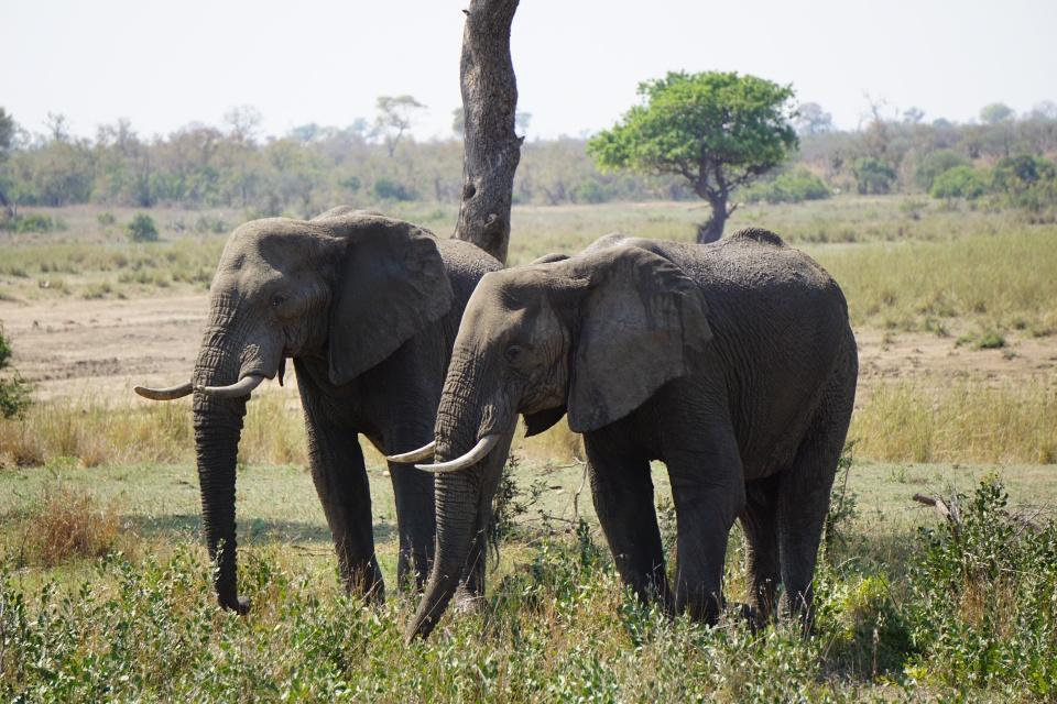 Elefanten im Kruger Nationalpark Suedafrika
