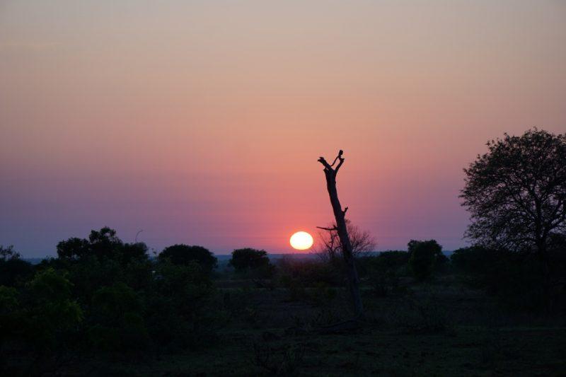 Sonnenaufgang im Kruger Nationalpark