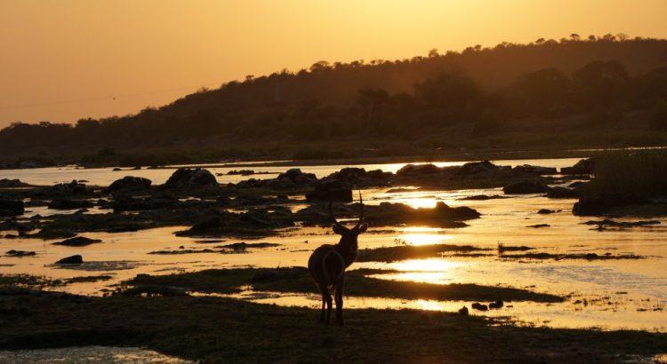 Sonnenuntergang im Kruger Nationalpark