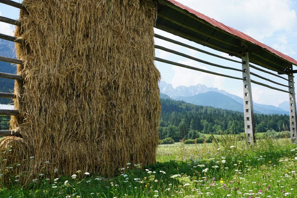 Wiese im Triglav Nationalpark in Slowenien