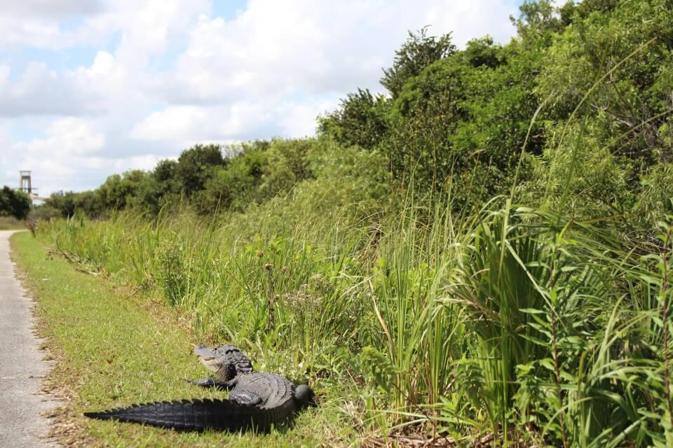 Wir sind die Shark Valley Loop Road in den Everglades mit dem Fahrrad gefahren - eine absolute Empfehlung