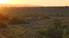 Sonnenuntergang im Kwandwe Private Game Reserve in Suedafrika