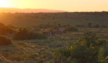 Sonnenuntergang im Kwandwe Private Game Reserve in Suedafrika