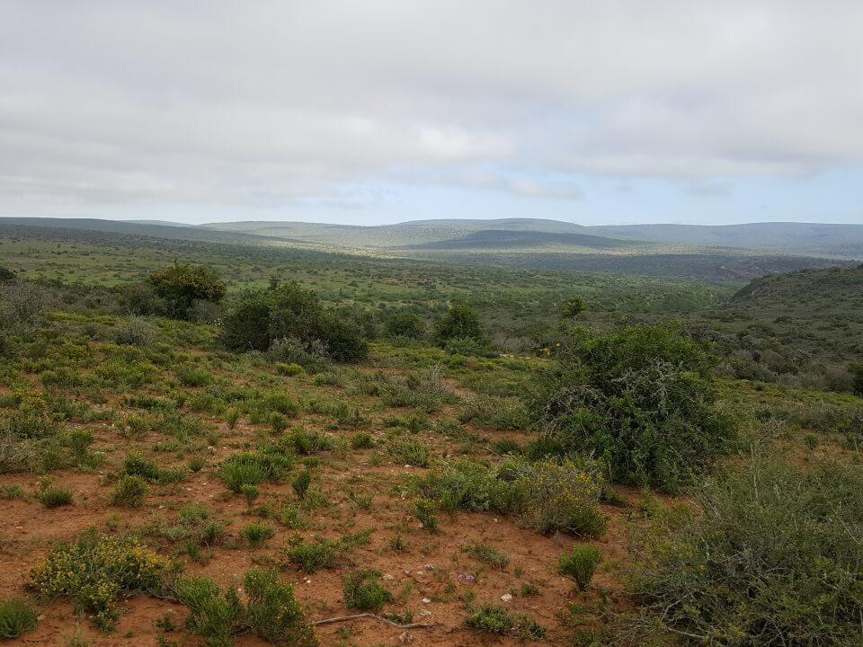 Auf Safari im Kwandwe Private Game Reserve in Suedafrika