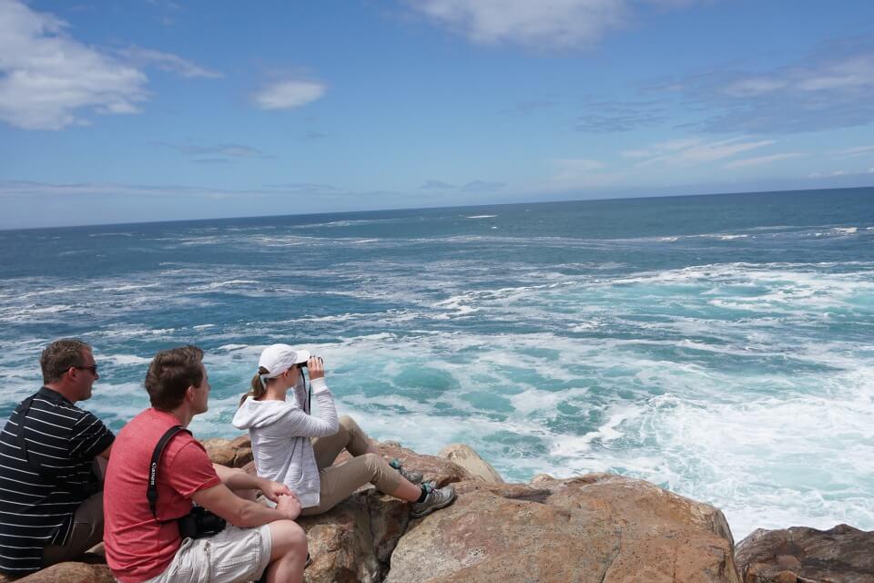 Am oestlichsten Punkt der Robberg Halbinsel sahen wir Robben, Delfine und Wale