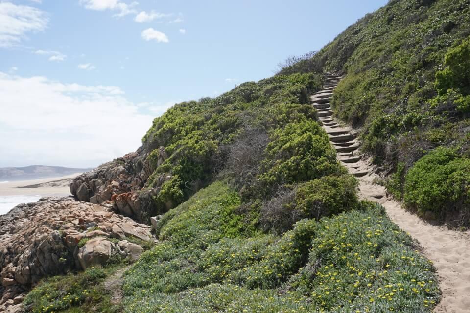 Einfacher Wanderweg im Robberg Nature Reserve an der Garden Route