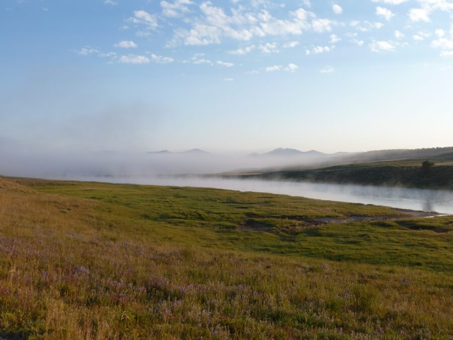 Morgennebel im Yellowstone Nationalpark
