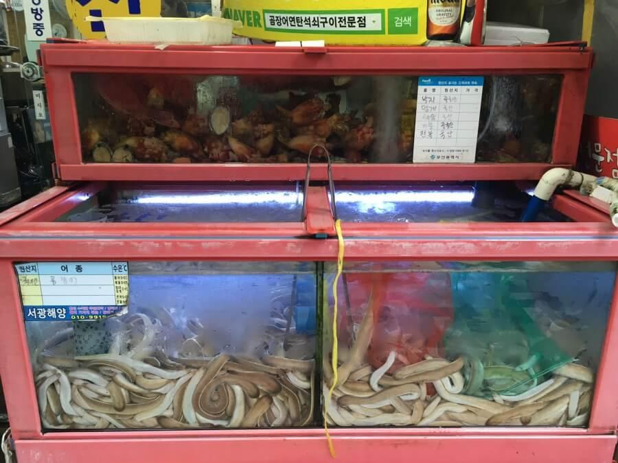 Frischer Aal in Busan