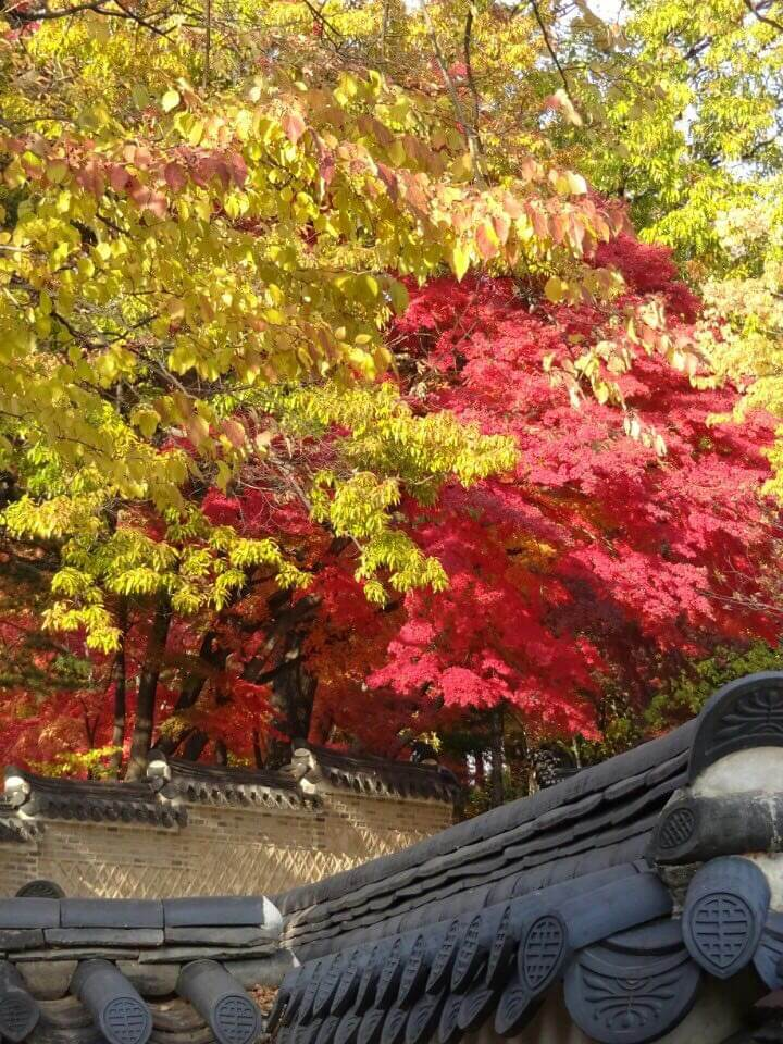 Herbstfarben in Seoul