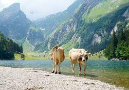 Wanderung zum Seealpsee auf unserem Schweiz Roadtrip