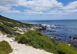 Wale beobachten an der Garden Route Suedafrika
