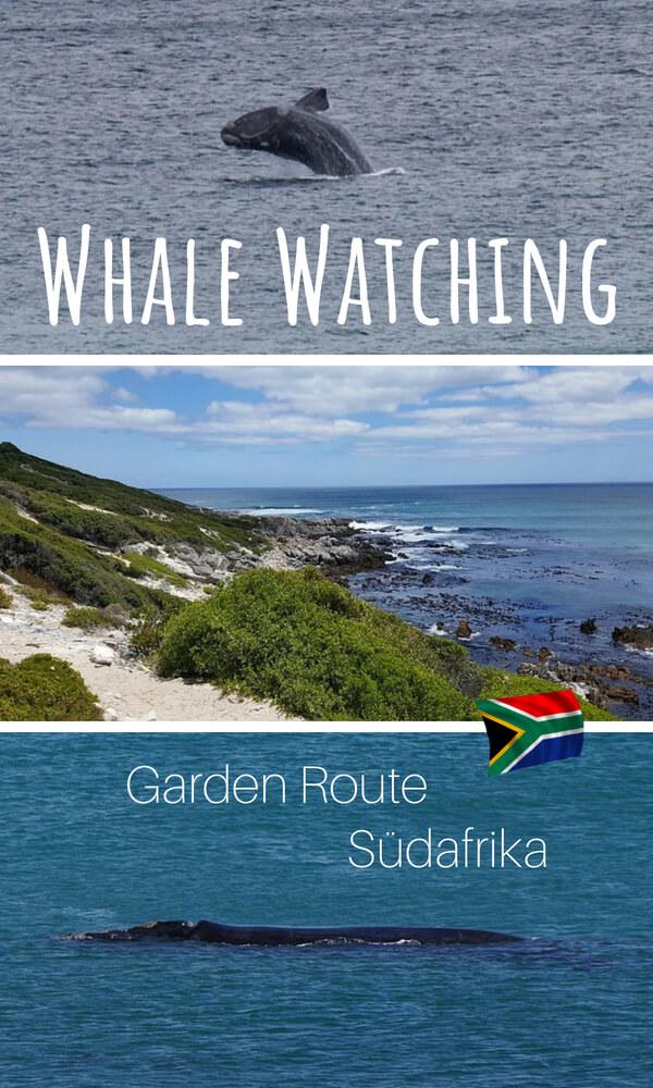 Wale beobachten an der Garden Route in Suedafrika - unsere Tipps