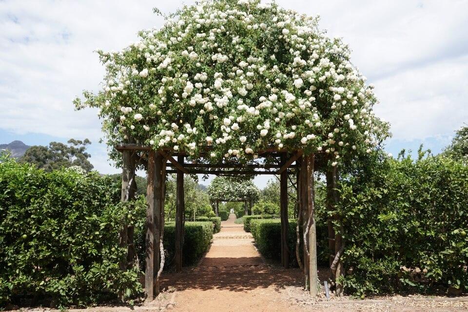 Garten der Farm Babylonstoren in den Cape Winelands Suedafrika