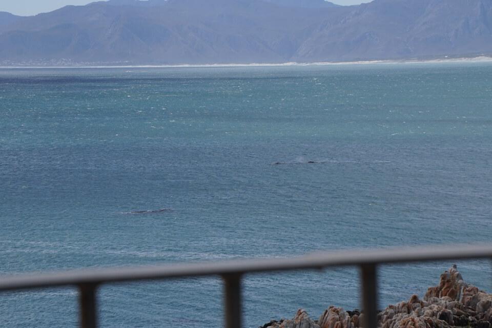 Wale vor de Kelders vom coffee on the rocks aus
