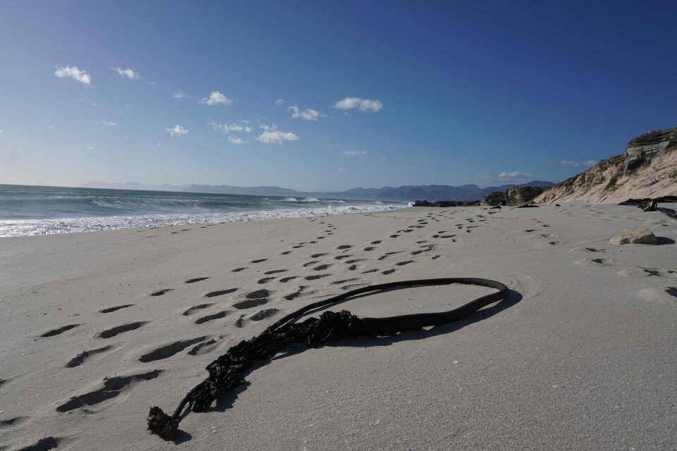 Walker Bay Nature Reserve an der Garden Route in Suedafrika