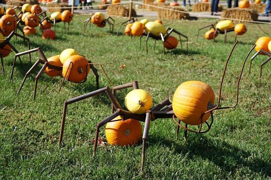 Ameisen auf der Kuerbisausstellung im Bluehenden Barock in Ludwigsburg