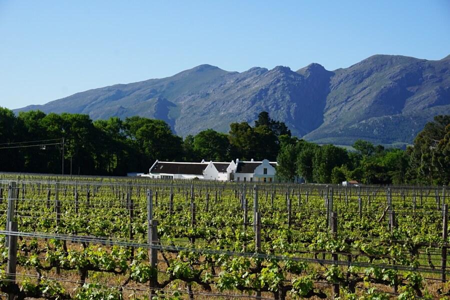 Ausblick vom Weingut Holden Manz in Franschhoek