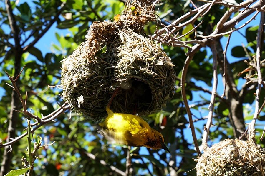 Ueber 250 Vogelarten im West Coast Nationalpark