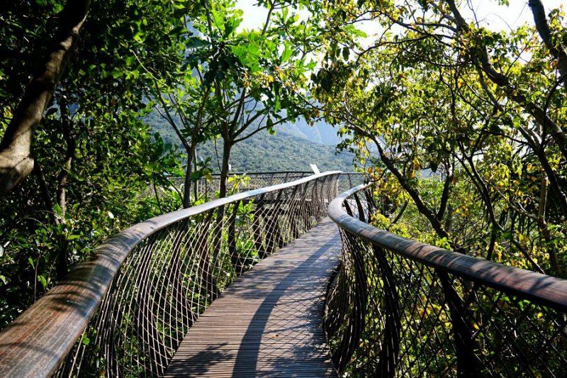 Der Canopy Tree Walkway im Kirstenbosch Botanical Garden in Kapstadt