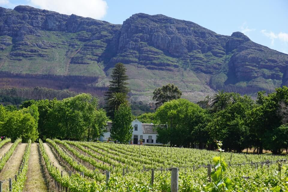 Tolle Weingueter in Constantia bei Kapstadt