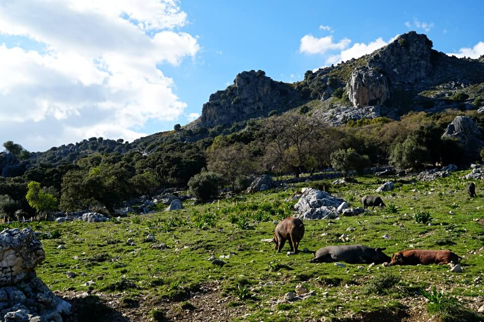 Idyllische Berglandschaft in der Sierra de Grazalema