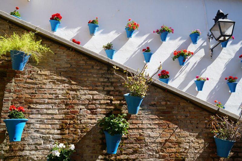Blumen in einem Innenhof in Cordoba