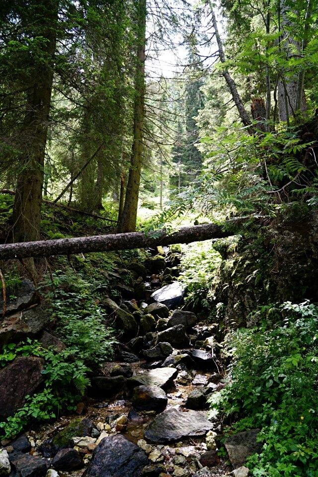 Der Wanderweg auf den Monte Lussari durch dichten Wald