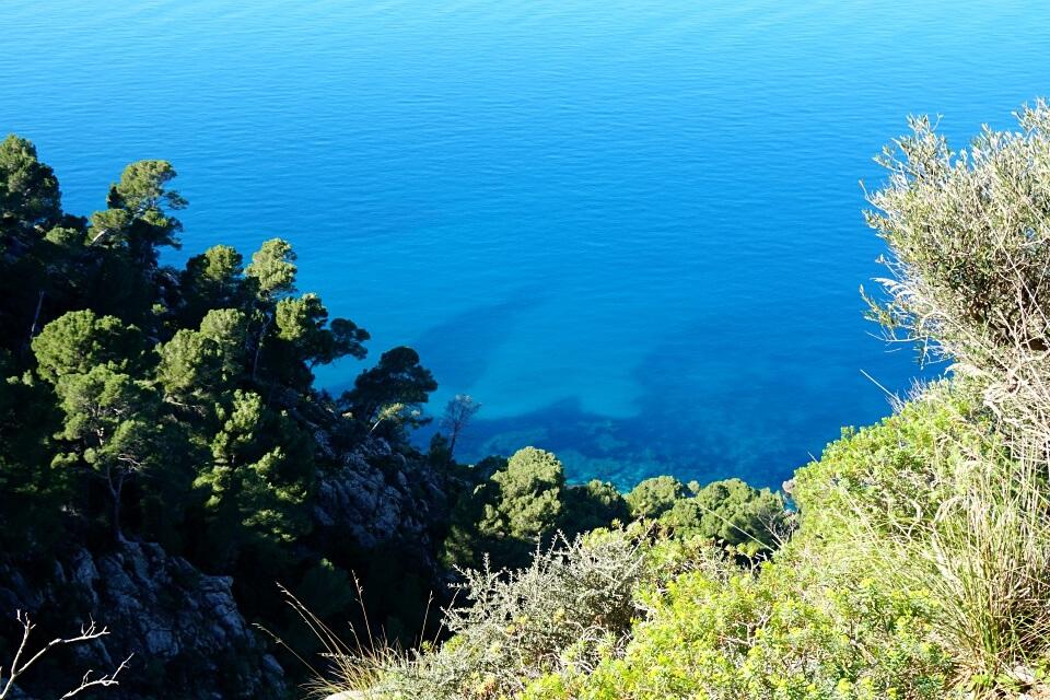 Olivenbaeume, Aleppokiefern und das blaue Meer auf dem Wanderweg nach Sa Foradada in der Serra de Tramuntana