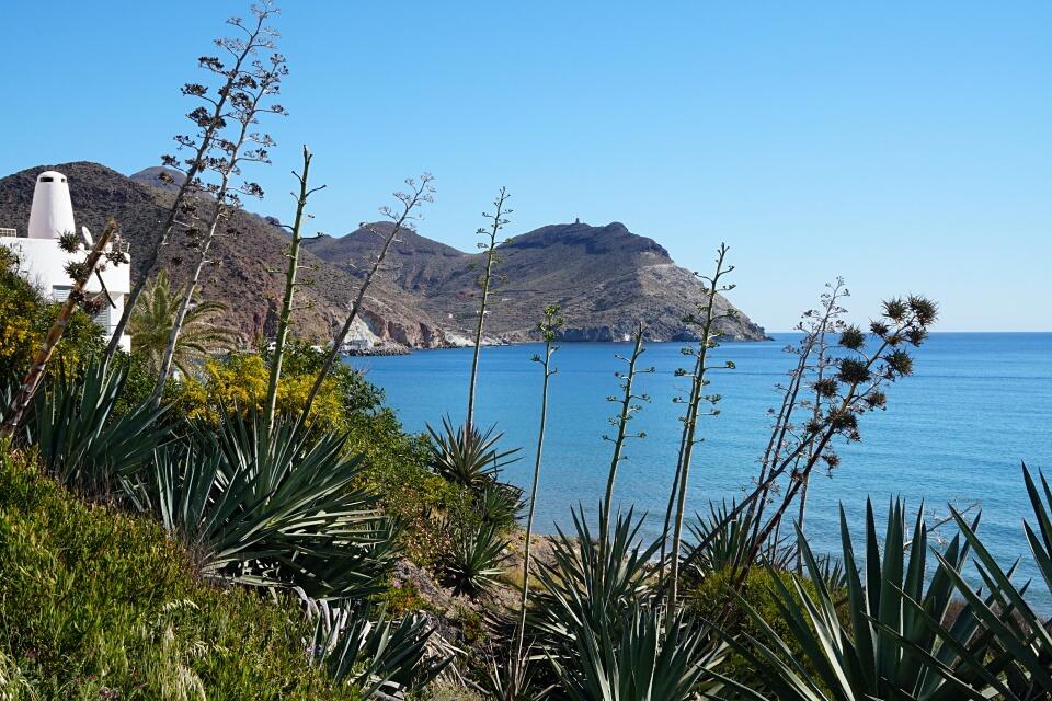 Agaven praegen die Landschaft im Naturpark Cabo de Gata