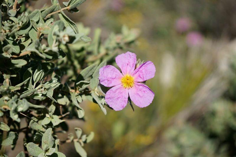 Pflanzen im Naturpark Cabo de Gata in Andalusien