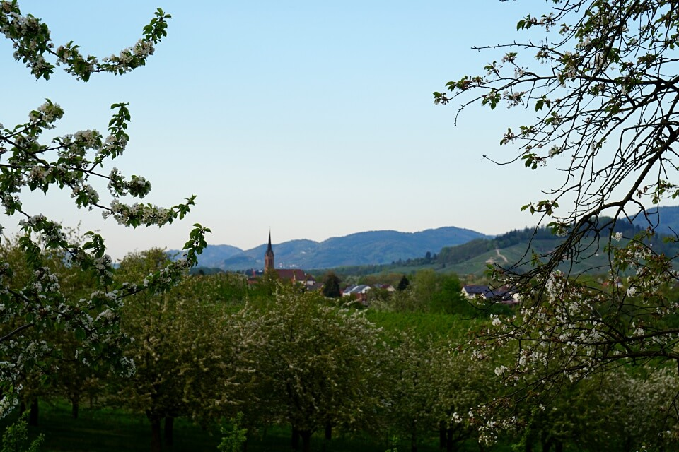 Das Renchtal wird auch als die Toskana Deutschlands bezeichnet