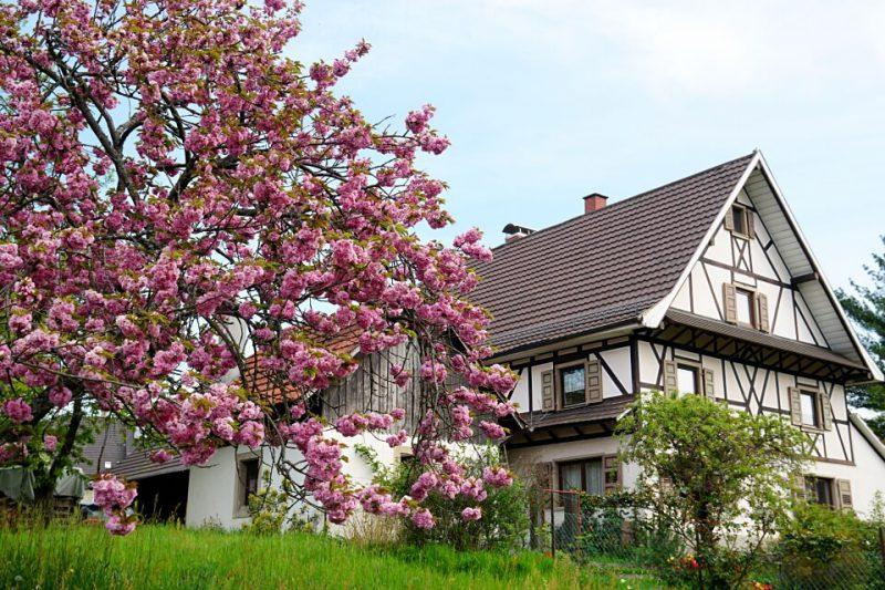 Fruehling im Renchtal im Schwarzwald