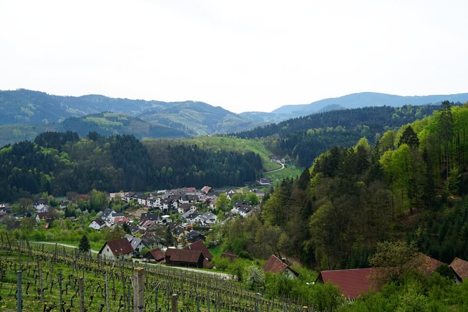 Ausblicke vom Brennersteig auf den Schwarzwald