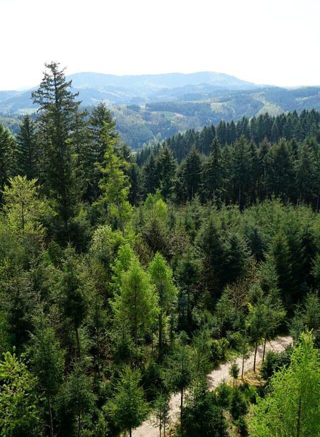 Ausblick vom Geigerskopf auf dem Brennersteig