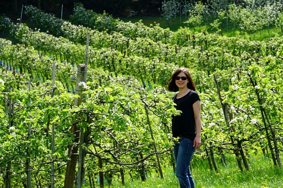 Apfelplantage auf dem Brennersteig