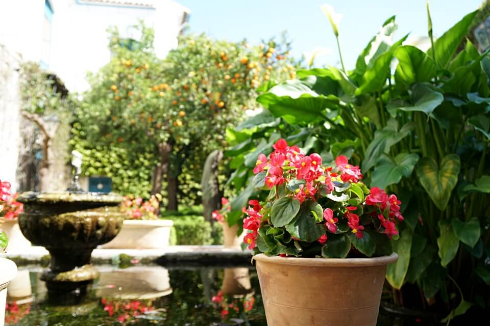 Patio in Cordoba Andalusien