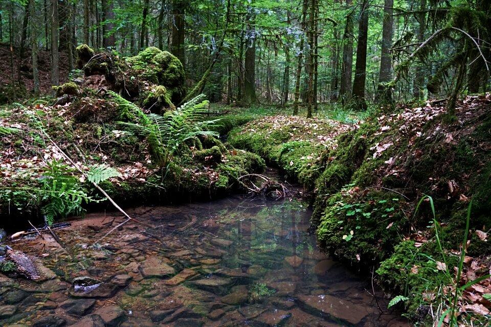 Natur im Schwaebischen Wald